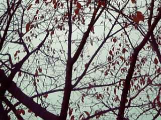 treetreetree.jpg