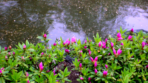 flowersandwater.jpg
