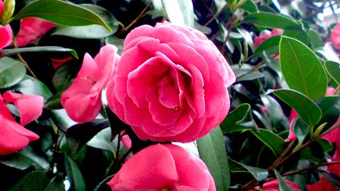 pinkflowerred.jpg